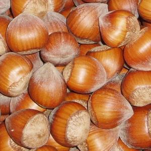 hazelnuts-in-shell
